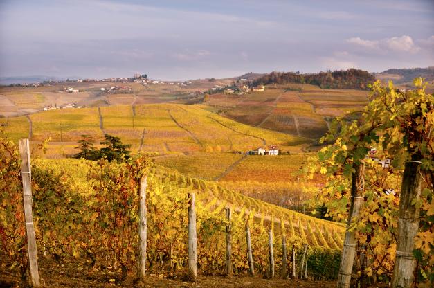 terre da vino Langhe e Monferrato