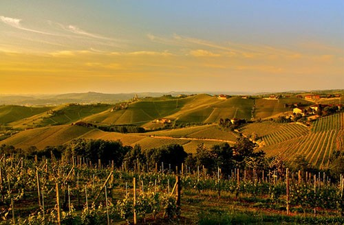 Piemonte terre da vino Vercelli Novara