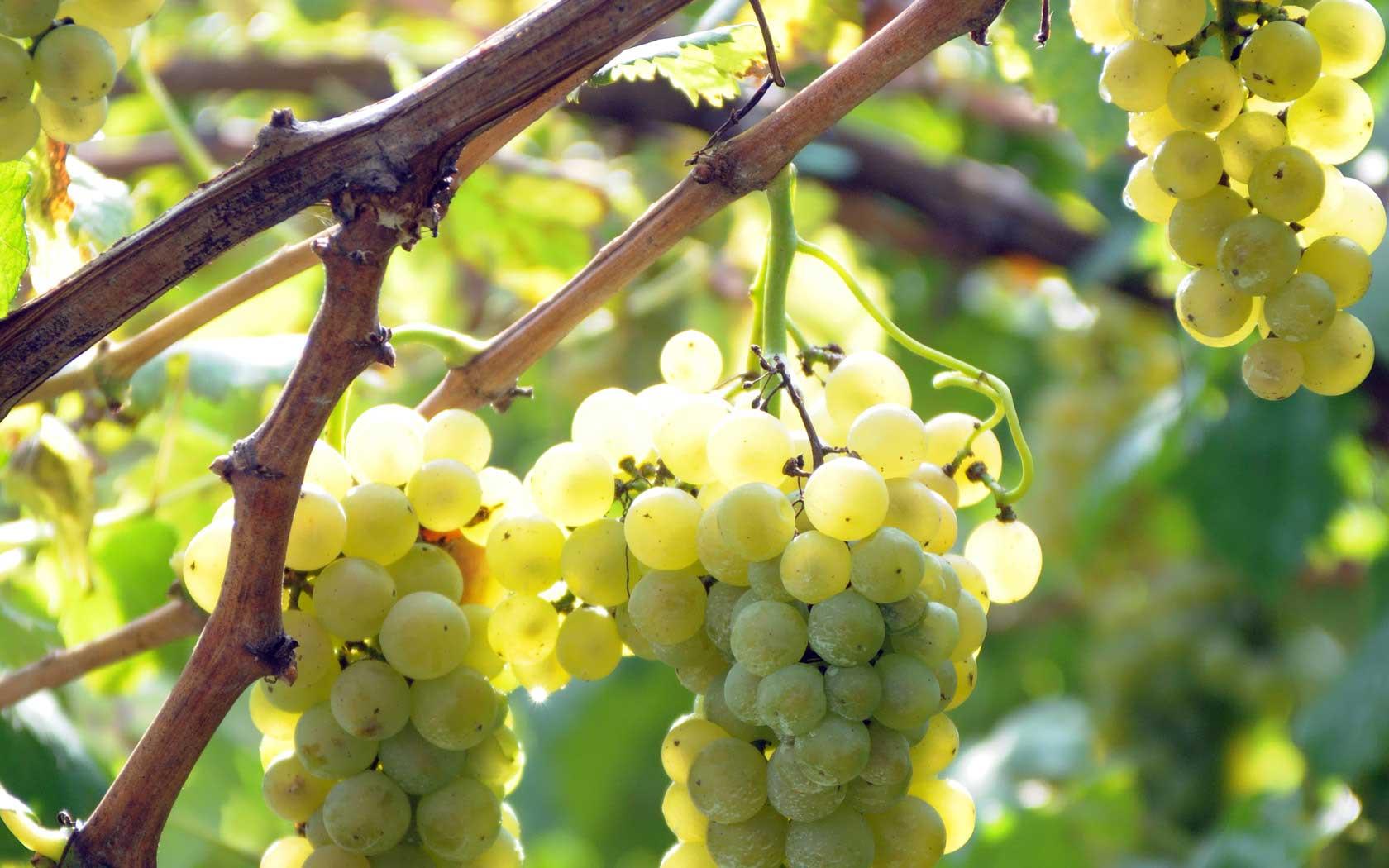 Il vino piemontese ci accompagnerà per tutto il Ferragosto…