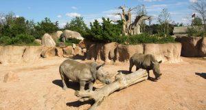 TOrinoceronte, al bioparco ZOOM una cena di beneficenza per salvaguardare la macrofauna africana