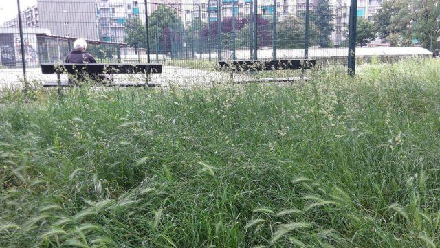Erba alta a Torino: aree verdi impraticabili e pericolose per i cani