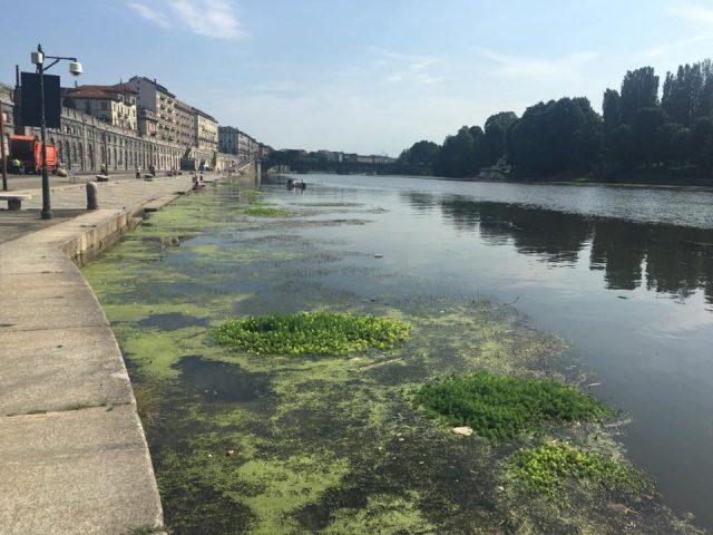 Alghe nel Po, la situazione peggiora: i cittadini chiedono l'intervento del Comune