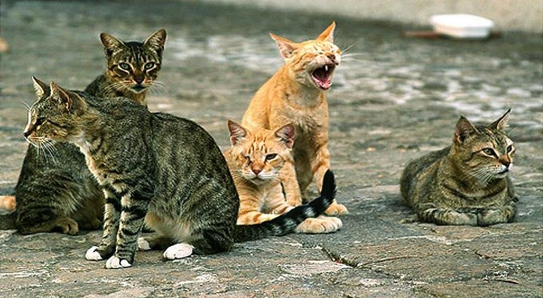 Emergenza gatti abbandonati a Torino: si pensa a microchip come per i cani