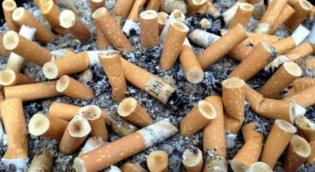 Inquinamento, a Torino i ragazzi di Greta hanno raccolto 75mila mozziconi di sigarette