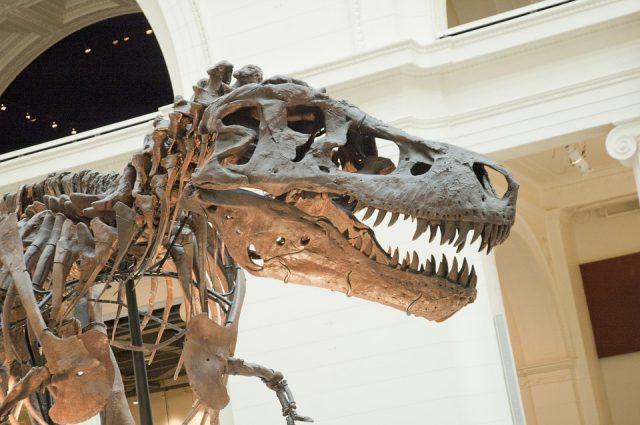 Il Museo di Scienze Naturali di Torino riaprirà nel 2020: è chiuso dal 2013