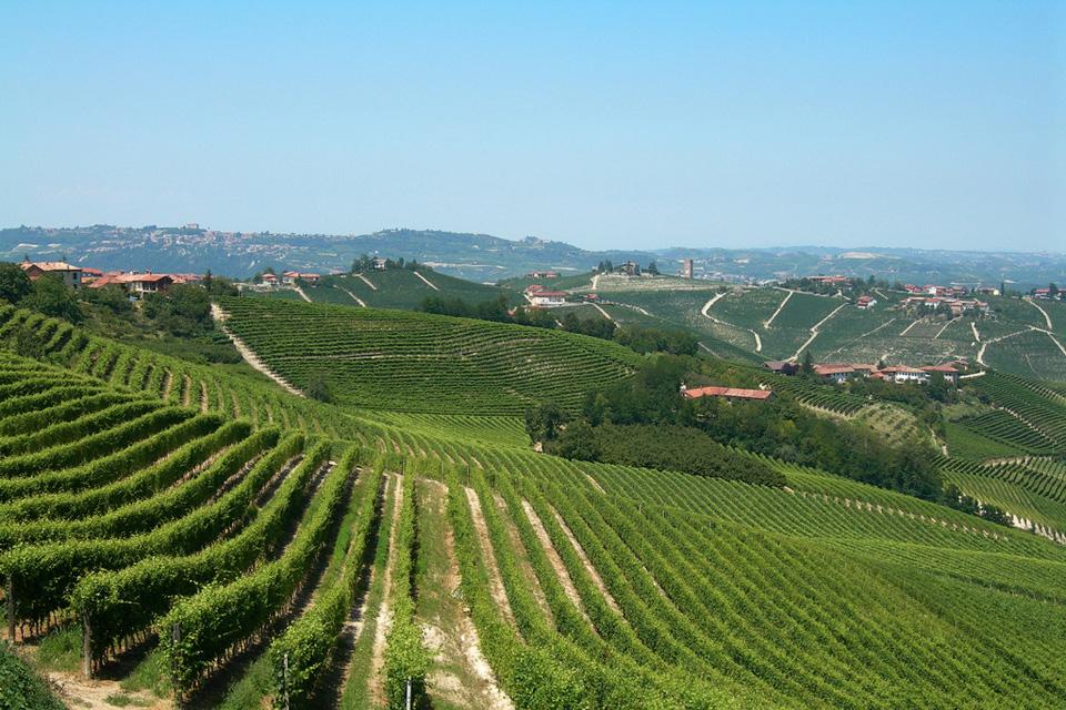 Terre da vino: Langhe e Monferrato