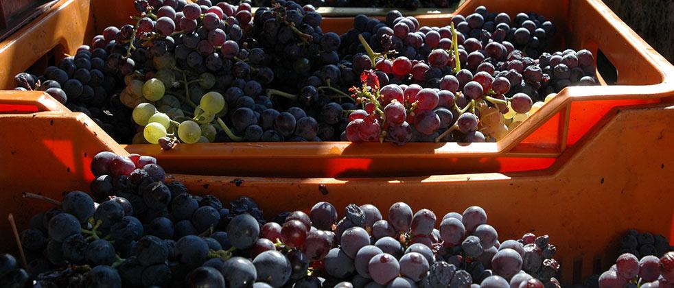 Vino Rosato Piemonte