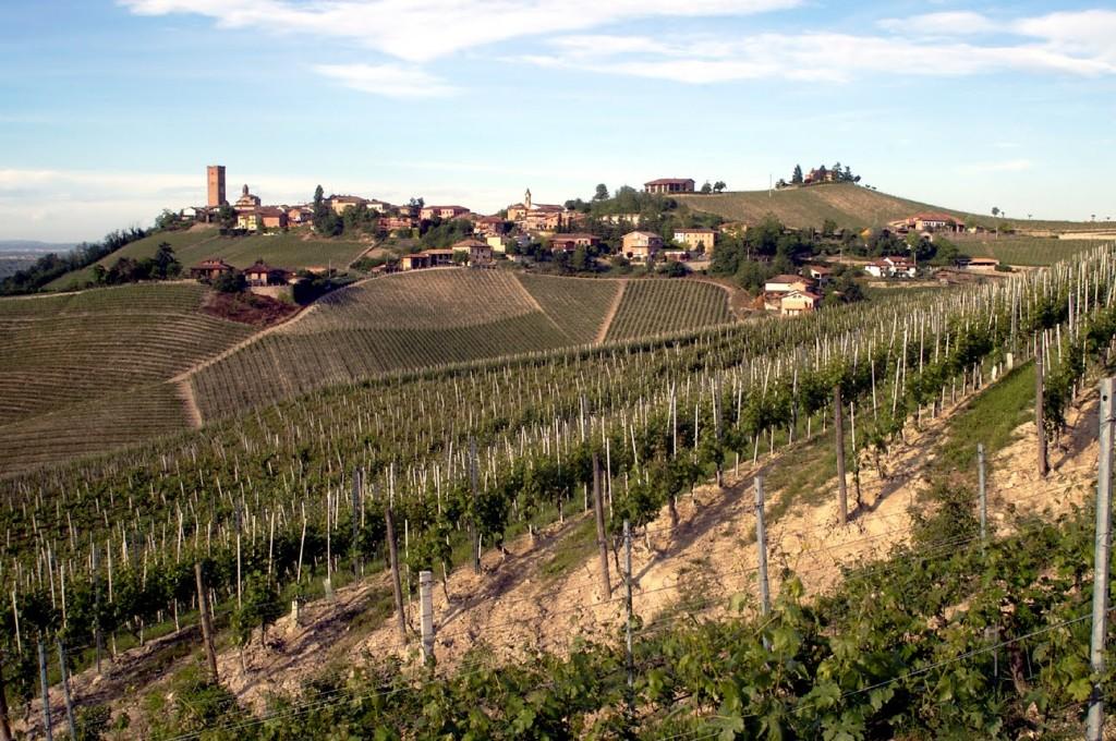 vino Barbaresco Piemonte