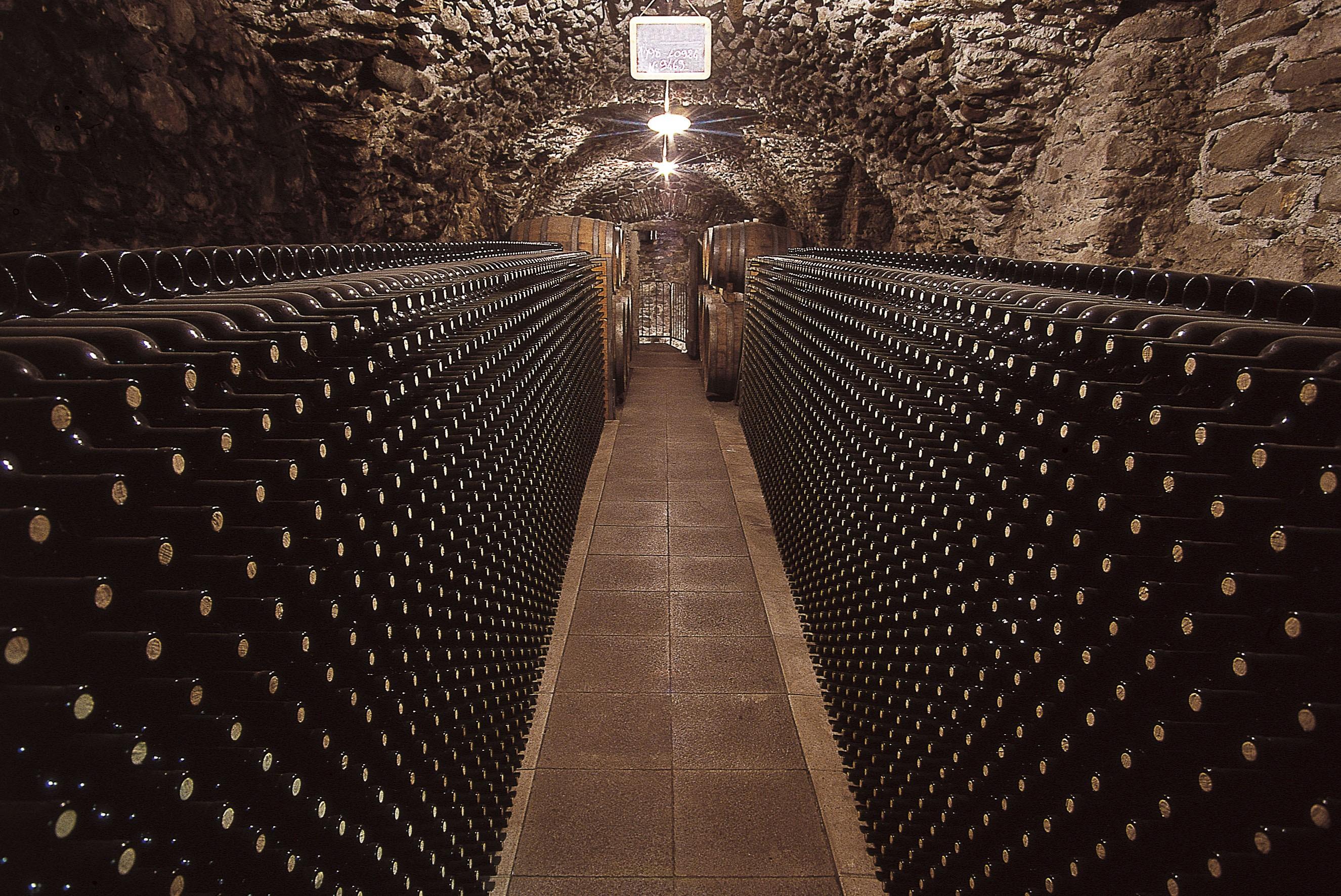 vino rosso la Barbera Piemonte