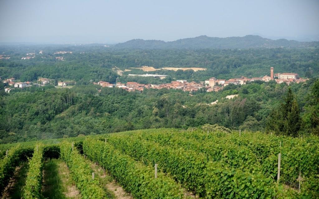 il Gattinara Piemonte vino