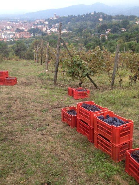 """La vigna dei Pini e lo """"Sclin"""" : il vino sincero e trasparente"""
