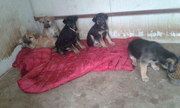Torino, 7 cuccioli di pastore tedesco sono stati salvati dall'Enpa