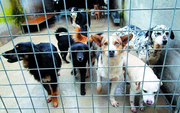 Donazioni al canile di via Germagnano, in arrivo cibo e coperte per gli animali ospitati