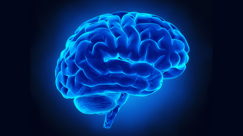 Scoperto a Torino il gene che fa nascere nuovi neuroni: le ricerche di NICO e Università di Torino