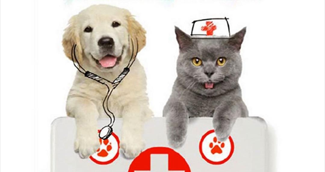 Photo of Alle porte di Torino nasce il pronto soccorso per gli animali domestici: un servizio per i nostri amici a quattro zampe
