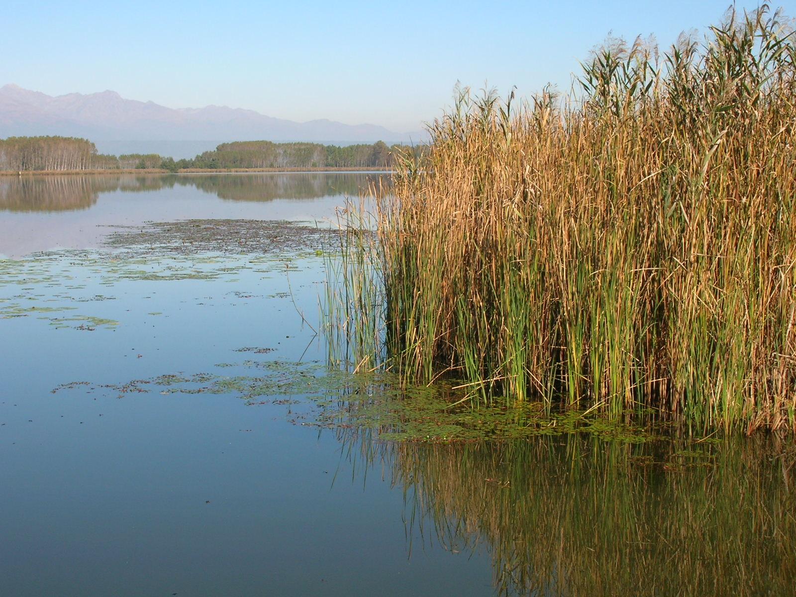Photo of Lago di Candia, alla scoperta delle origini preistoriche