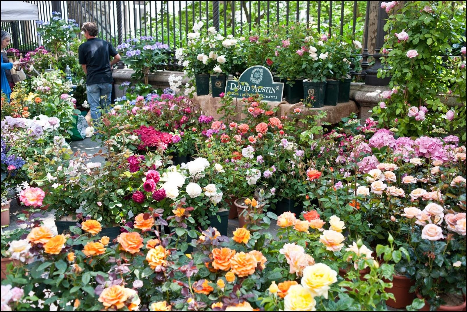 Torna a Torino Flor 2019, la grande mostra mercato floreale nel cuore della città