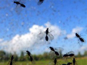 Invasione di moscerini a Torino: sciami di piccoli insetti in diverse zone della città