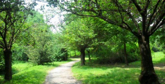 Torino, il Parco Stura rinasce: da luogo di spaccio e degrado a prima foresta urbana