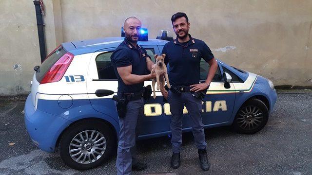 Torino, un cucciolo di cane è stato salvato dalla Polizia: sarà la mascotte del Commissariato