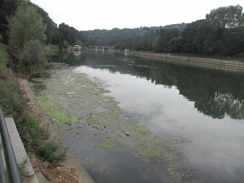 Emergenza plastica nel Po: decine di bottiglie soffocano il tratto torinese del fiume