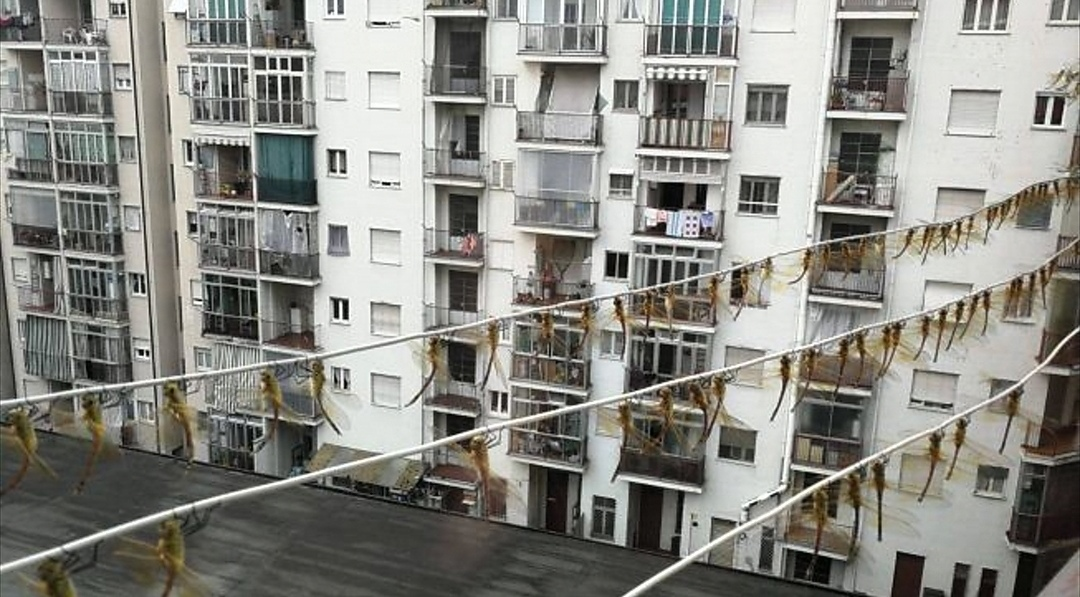 Invasione di grilli e libellule a Torino, gli esperti rassicurano: nessun pericolo per l'uomo
