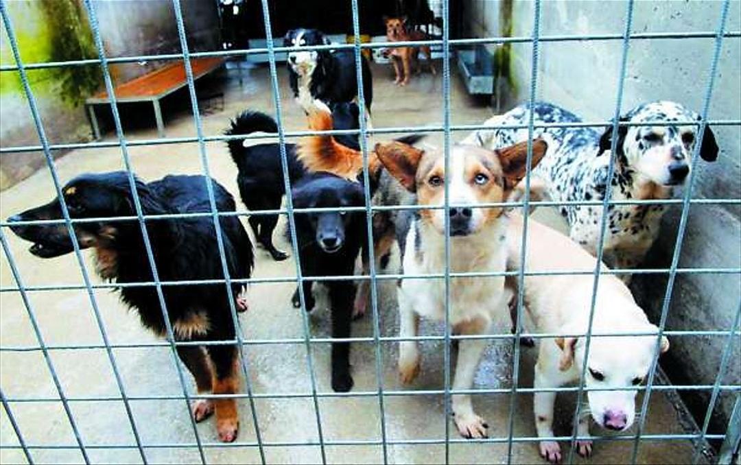 Porte aperte al Canile di Torino: si potranno adottare cani e gatti in cerca di famiglia