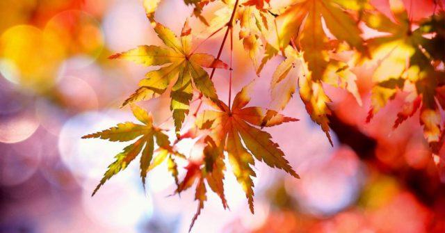 Arriva Autumnus 2019 a Torino: i fiori invaderanno il Borgo Medievale