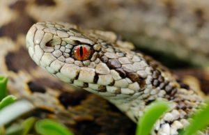 Invasione di serpenti a Torino: in città anche altri rettili, sempre più numerose le segnalazioni
