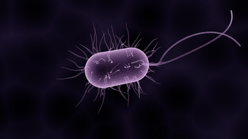 Photo of L'Università di Torino studia come si muovono i batteri nel corpo: scoperte interessanti dagli studi