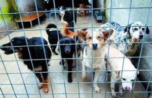 Chiude il canile di via Germagnano: gli animali spostati a Grugliasco e in strada Cuorgnè