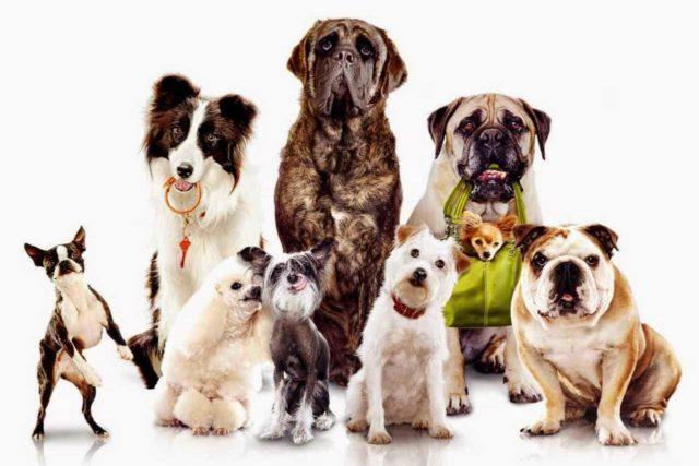 Torino città degli animali: in aumento i cani, diminuisce il randagismo