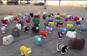 Invasione di pecore in piazza Castello: è una performance per valorizzare Biella