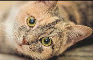 Il 2020 sarà l'anno del gatto a Torino: il Comune ha scelto di celebrare i felini