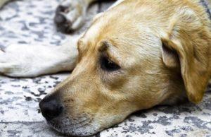Torna l'incubo dei bocconi killer per i cani a Torino: alimenti pericolosi trovati a Borgo Vittoria
