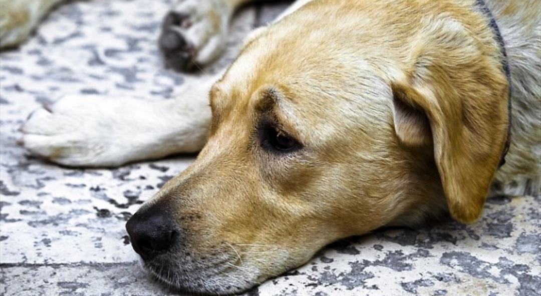 Photo of Torna l'incubo dei bocconi killer per i cani a Torino: alimenti pericolosi trovati a Borgo Vittoria