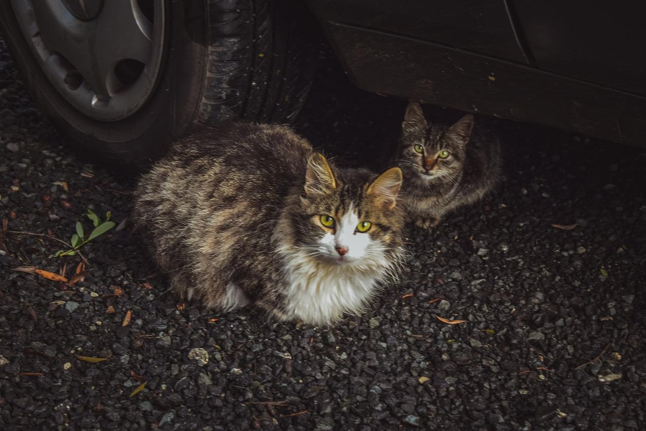Photo of Rivoli, un altro incendio alla colonia felina, bruciate le cucce per i gatti donate dai cittadini