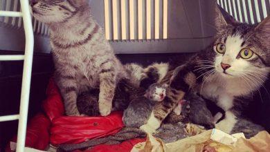 Photo of Nichelino, trovati 12 gattini abbandonati per strada, ora cercano famiglia