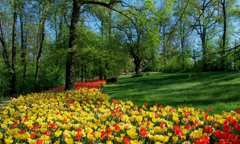 centinaia di tulipani gialli e rossi