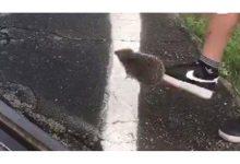 Photo of Riccio ucciso a calci per divertimento: identificato il responsabile.