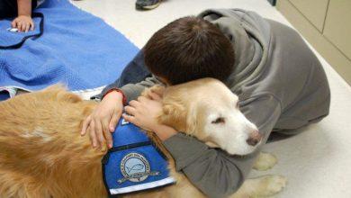 Photo of Pet therapy a Torino ancora sospesa. Causa coronavirus