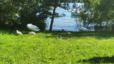 Photo of Lago di Viverone, meta apprezzata e anche balneabile