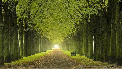 Photo of Torino combatte i cambiamenti climatici: meno asfalto e 30mila nuovi alberi in arrivo