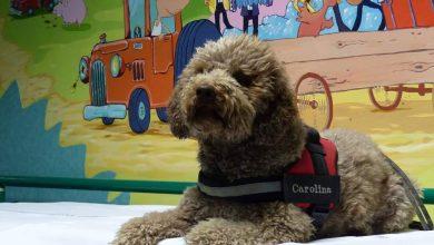 Photo of Morta la cagnolina della pet therapy del Regina Margherita: Carolina se n'è andata a 14 anni