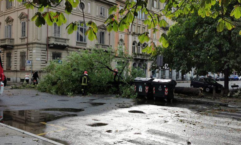 torino albero caduto