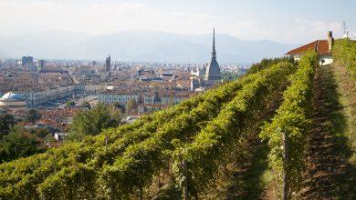 Photo of A Torino si vendemmia in città: record per la vigna della regina