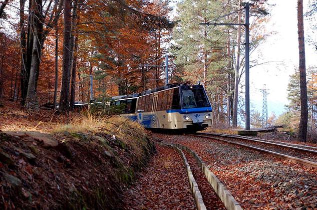 treno nel bosco