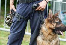 Photo of In Piemonte i cani anti-covid in aeroporto