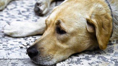 Photo of Bocconi killer per i cani a Torino: spugne fritte per ingannare gli animali a Mirafiori Sud