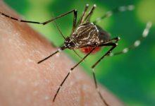 Photo of Torna l'incubo della Febbre del Nilo in Piemonte: arriva la zanzara coreana